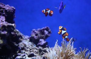 mudanza de un acuario: consejos